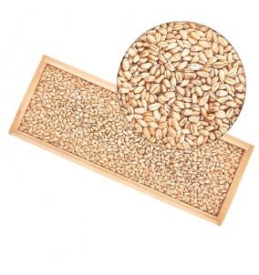Malt WRM Wheat Pale